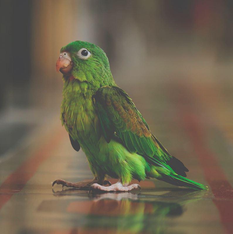 egzotyka-w-twoim-domu-czym-karmic-papugi2