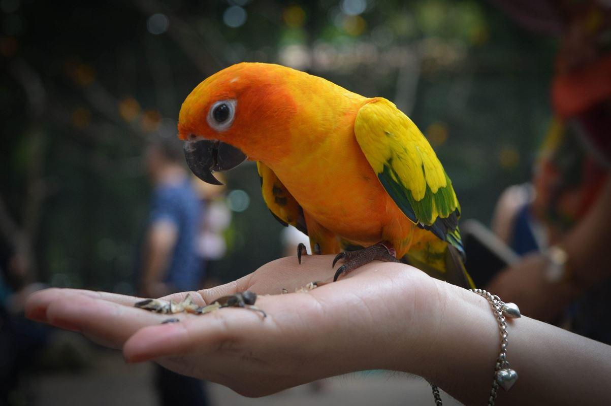 egzotyka-w-twoim-domu-czym-karmic-papugi3