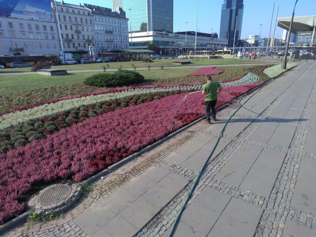 wrzosy-pl-defilad_fot-zarzad-zieleni