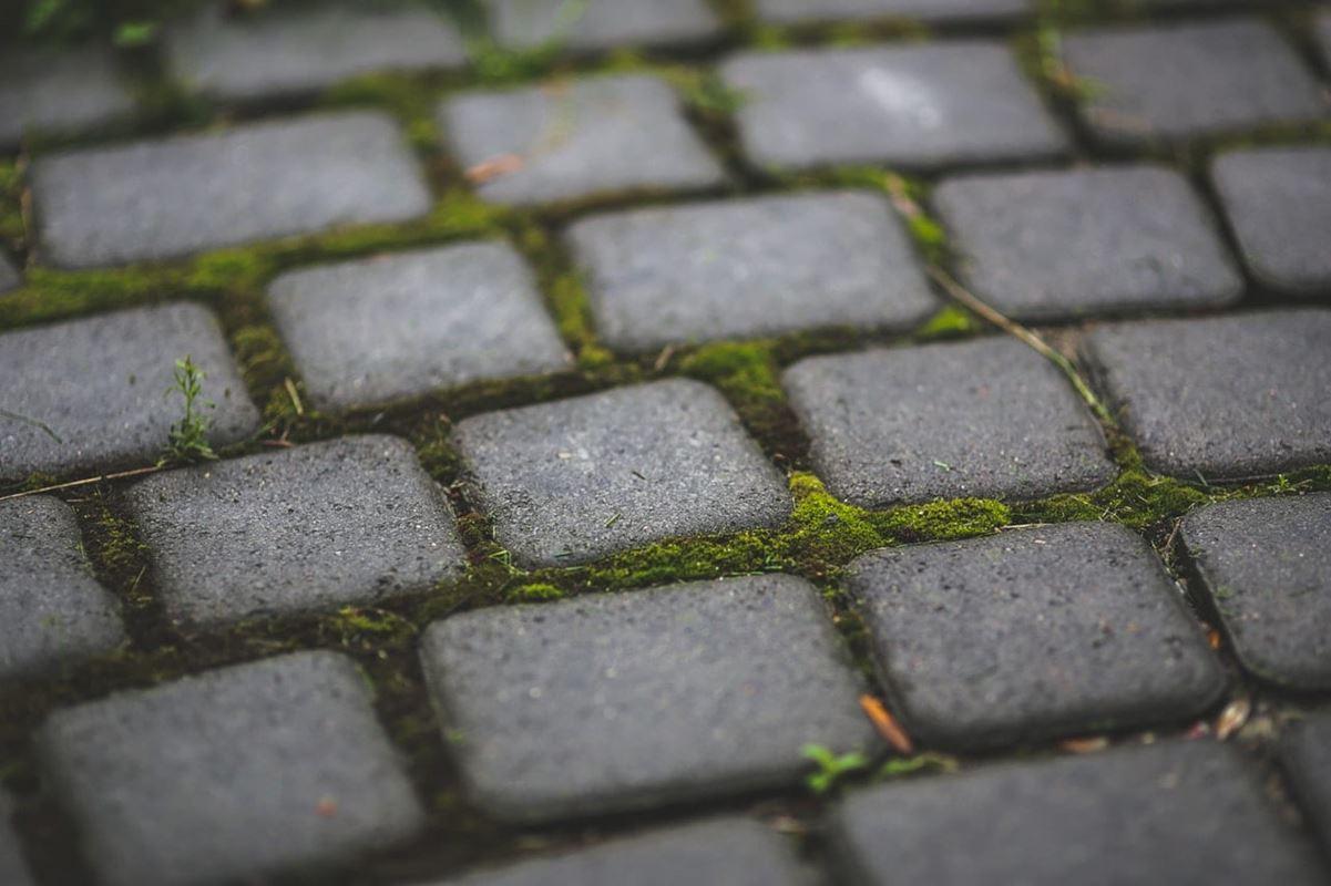 garden-moss-patio-6083