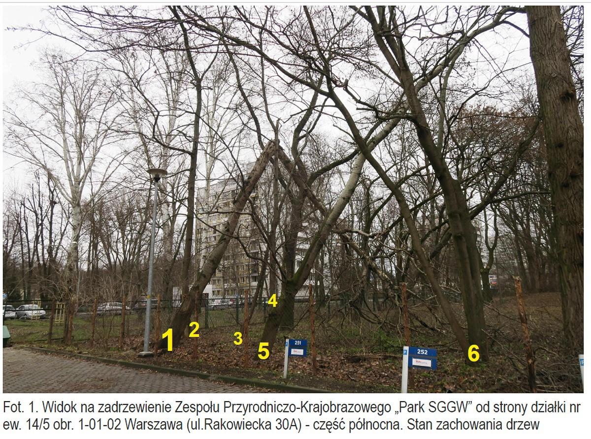 Istniejący Park SGGW - stan obecny.